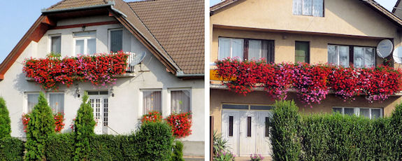Village Houses with Large Arrays of Flowers