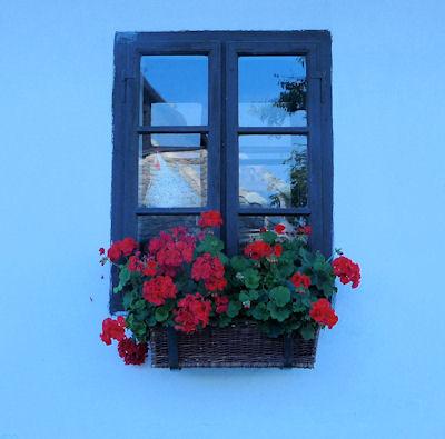 Flower Window Box in Holoko