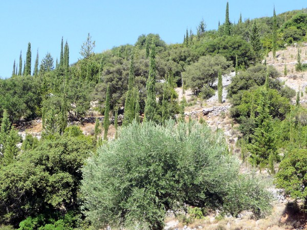 Greece Countryside