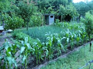 Nyaralo's Vegetable Garden