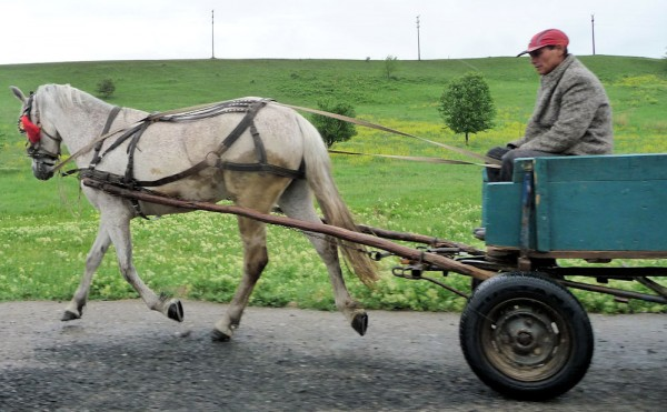 Horse and Wagon in Romania